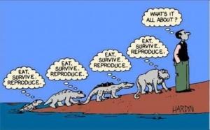 evolution_cartoon